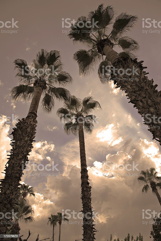 Palm trees, clouds, sunset. stock photo