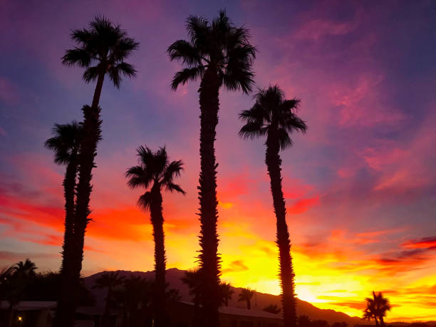 Palm Trees Colorful Sunset stock photo