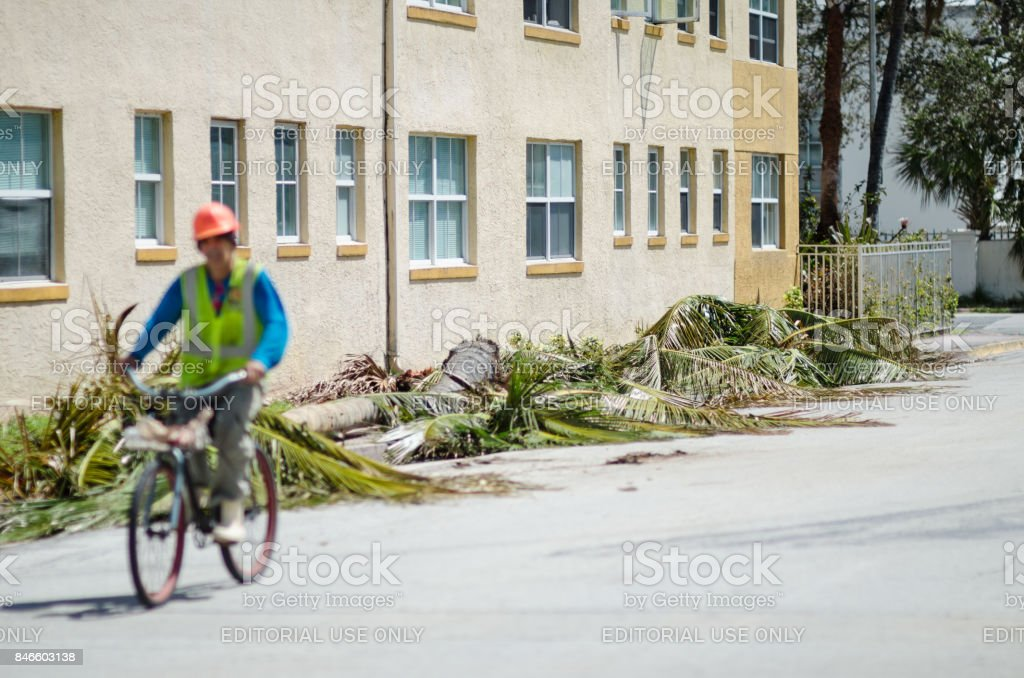 Palm Trees Downed in Hurricane Irma in Miami stock photo
