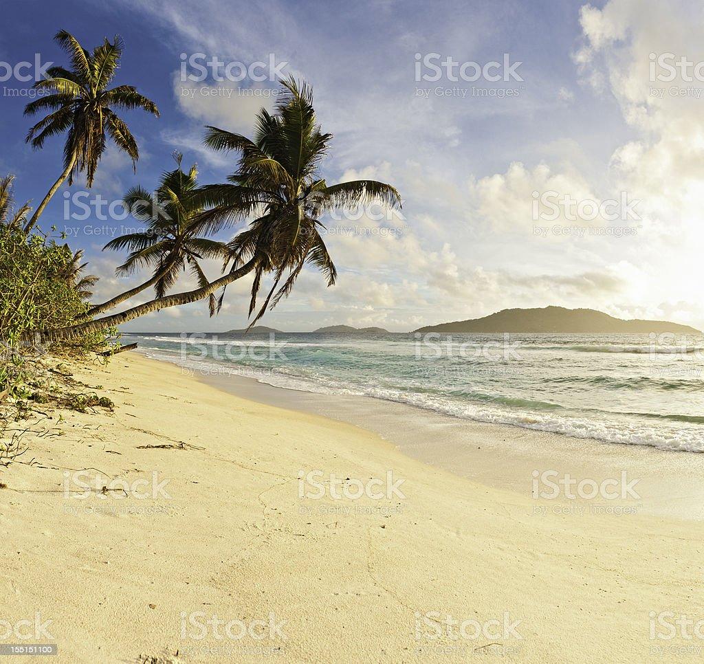 Palm trees golden sand beach tropical island shore royalty-free stock photo