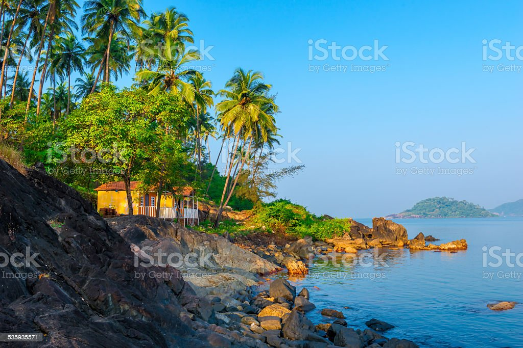 palm trees growing on the rocky shore in heavenly place stock photo