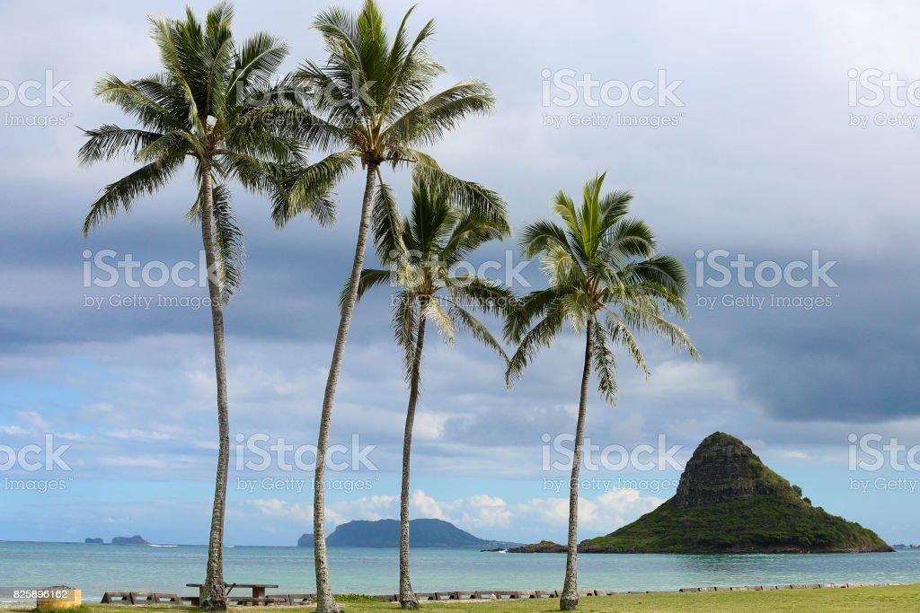 palm trees hawaii stock photo