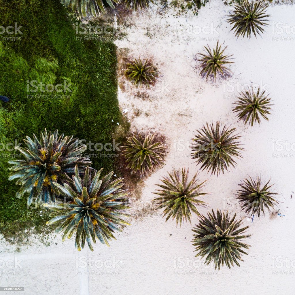 Palm trees in a beach aerial view from drone stock photo