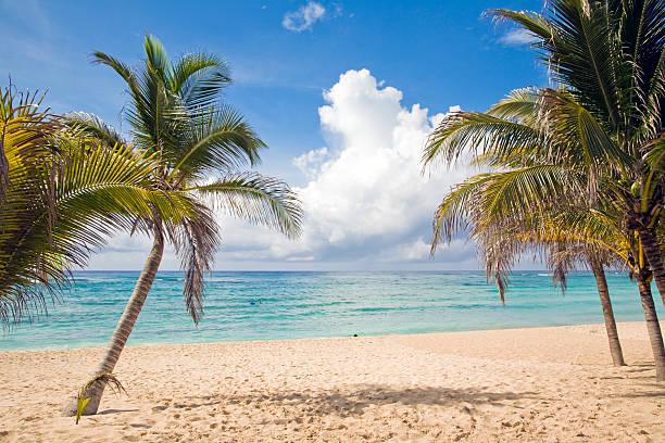 3 Palm trees in a serene beach scene stock photo