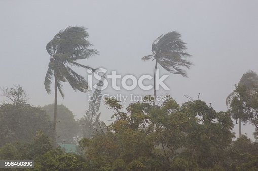 Phuket. Strong storm wind sways the trees and breaks the leaves from the two palm trees. The street is heavy rain. The weather turned bad. Declared a storm warning