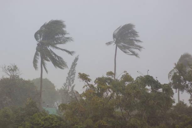 Palm trees in a storm picture id958450390?b=1&k=6&m=958450390&s=612x612&w=0&h=yk0fdyef1zuzxzc7gzsscy mgm2shx2tkmdxcoprp9y=