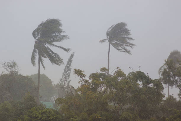 Palm trees in a storm stock photo