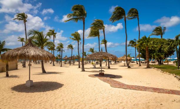 Palmen in Aruba Eagle Beach – Foto