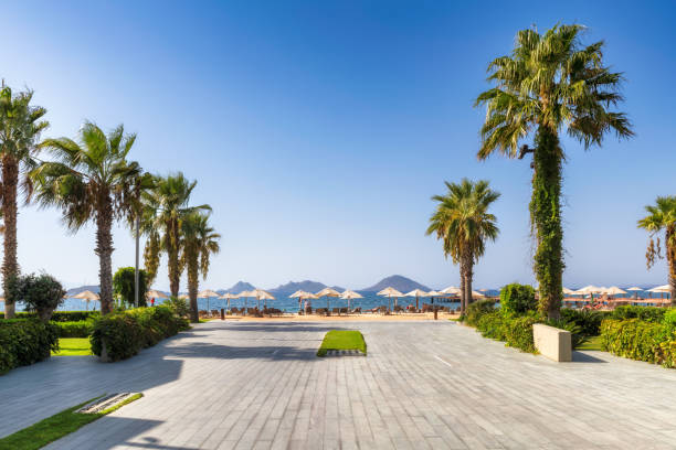 Palm trees in beautiful beach with sun umbrellas and Aegean sea stock photo
