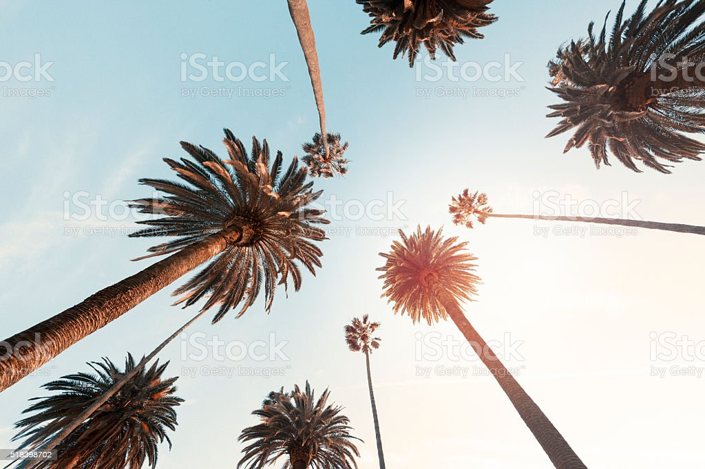 Palm Trees in Beverly Hills, california stock photo