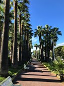 Cannes, France - October 3 2019: Palm tree-lined street in Cannes park daytime with clear blue sky