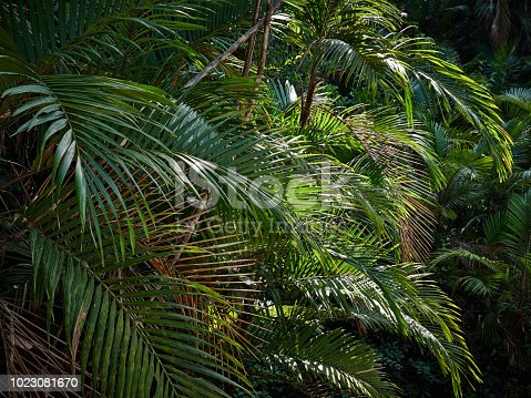 1146114680istockphoto palm trees in costa rica 1023081670