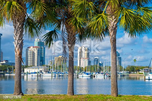 A row of palm trees at the port of St. Petersburg.
