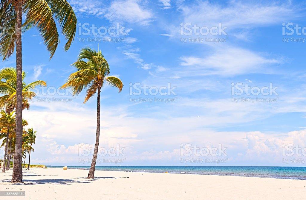 Palm trees in Hollywood Beach near Miami Florida stock photo