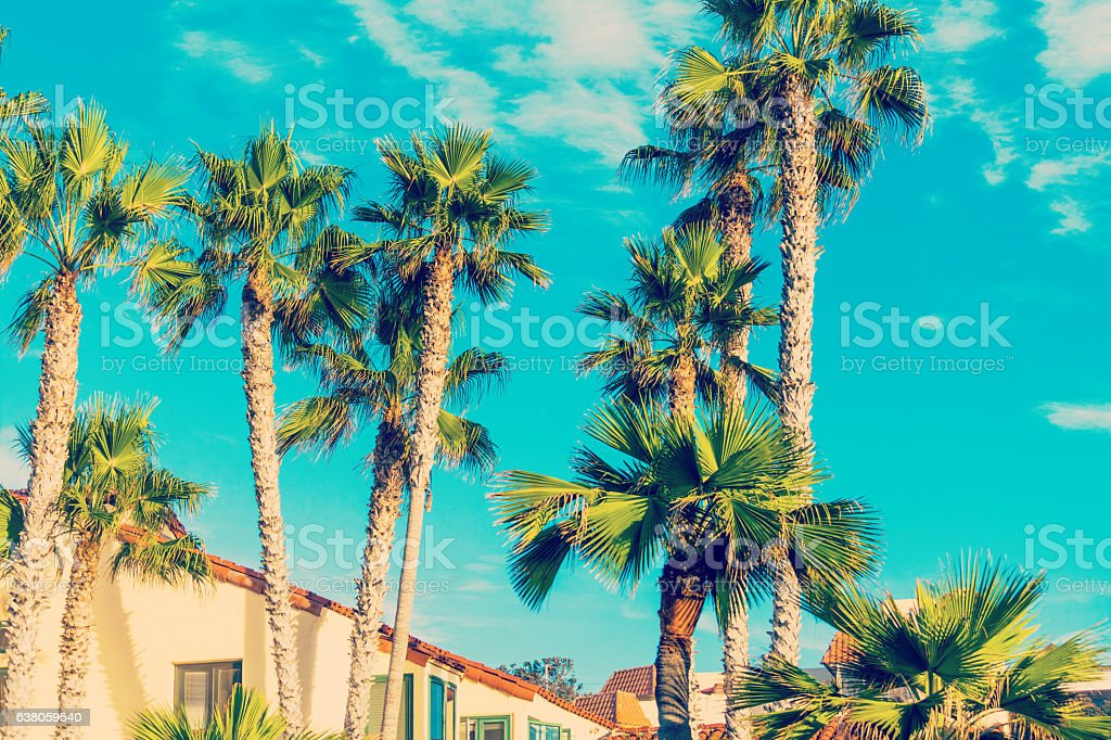 Palm trees in La Jolla stock photo