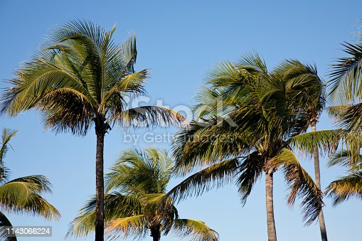 Tranquil Scene of lazy palms. Image shot with Canon 5D Mark 4, 24-105mm f/4L IS USM lens.