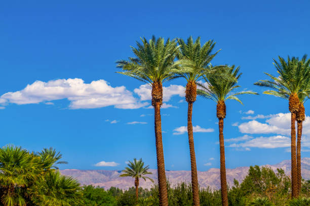 Palm trees in line with panoramic view of the San Bernardino Mountains Palm trees in line with panoramic view of the San Bernardino Mountains san bernardino california stock pictures, royalty-free photos & images