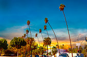 Palm trees in Los Angeles at sunset. Southern California, USA