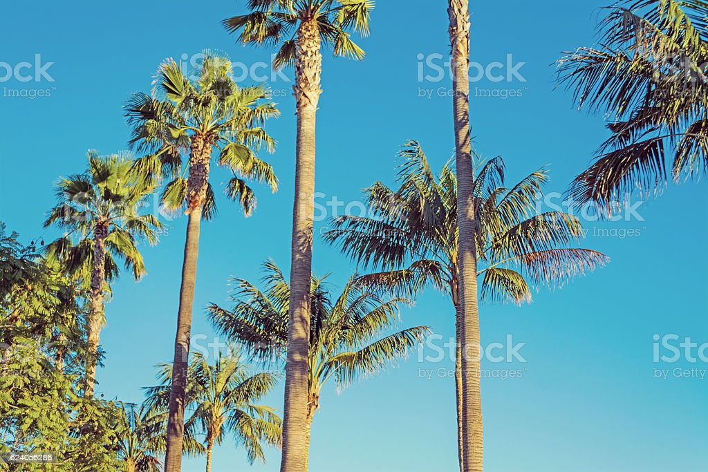palm trees in Los Angeles in vintage tone stock photo