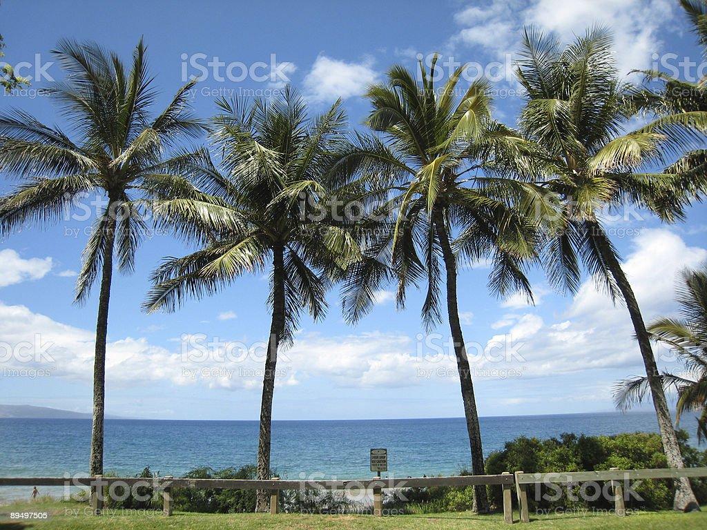 Palmiers à Maui photo libre de droits
