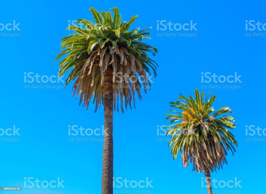 Palmiers dans Midcity. - Photo de Arbre libre de droits