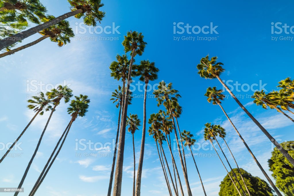 Palm trees in Mission bay stock photo