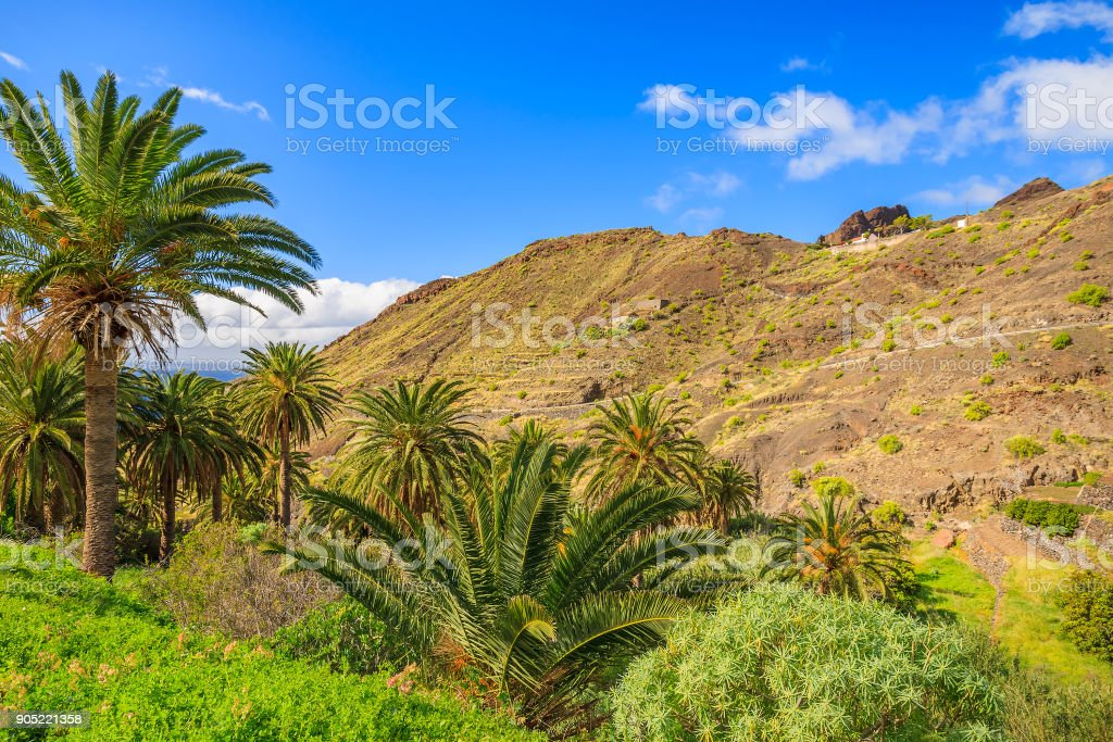 Palm trees in mountain valley of tropical La Gomera island, Spain