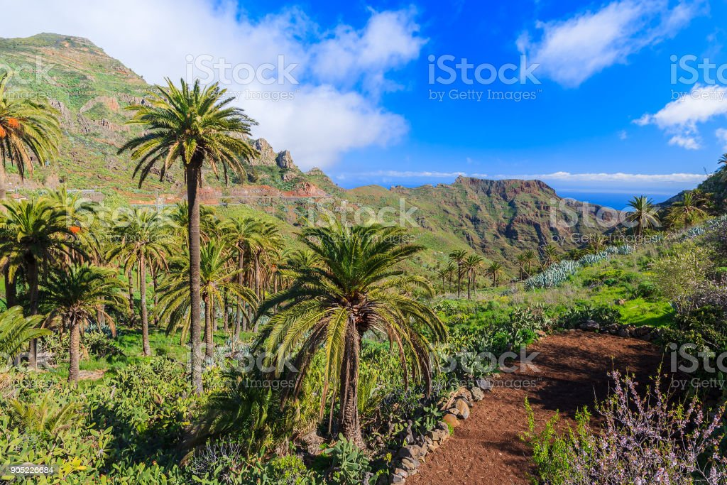 Palm trees in mountain valley with ocean clouds blue sky in the...