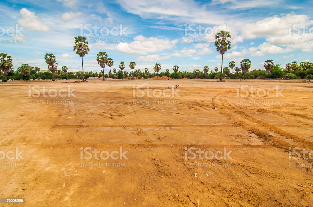 Palm trees in open space. stock photo