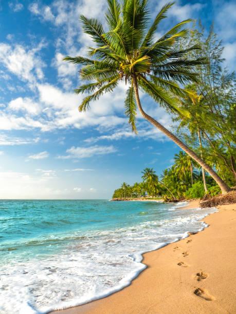 palm trees in paradise - great barrier reef marine park stock pictures, royalty-free photos & images