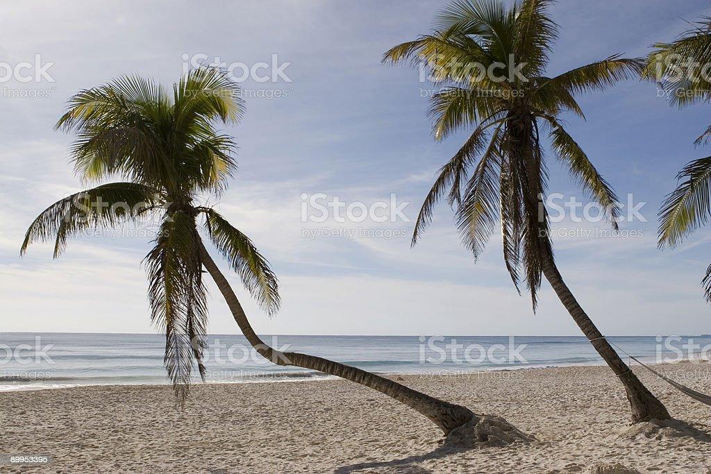 Palmen im Paradies – Foto
