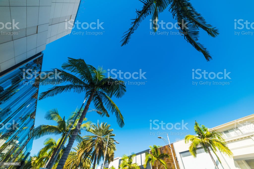 Palm trees in Rodeo Drive in Beverly Hills - Royalty-free Boutique Stock Photo