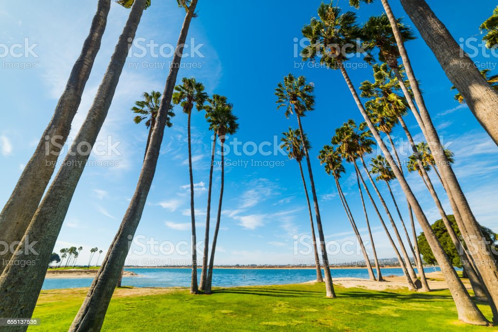 Palm trees in San Diego shoreline stock photo