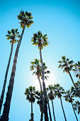 Summertime vibes in Santa Barbara, California. Palm trees in a row by the ocean boardwalk.