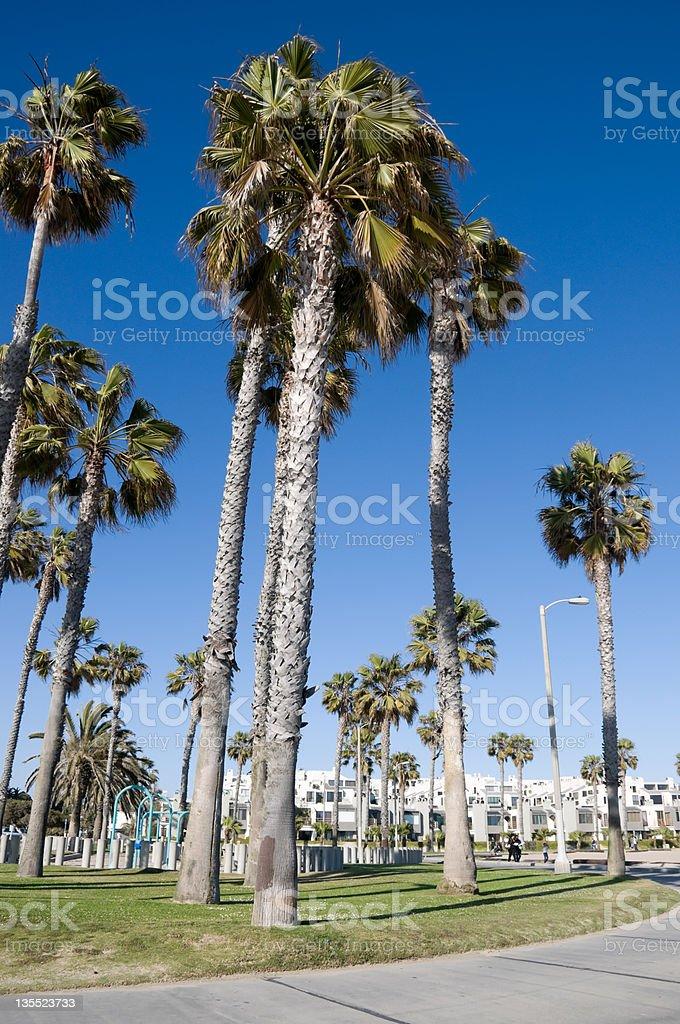 palm trees in Santa Monica Los Angeles royalty-free stock photo