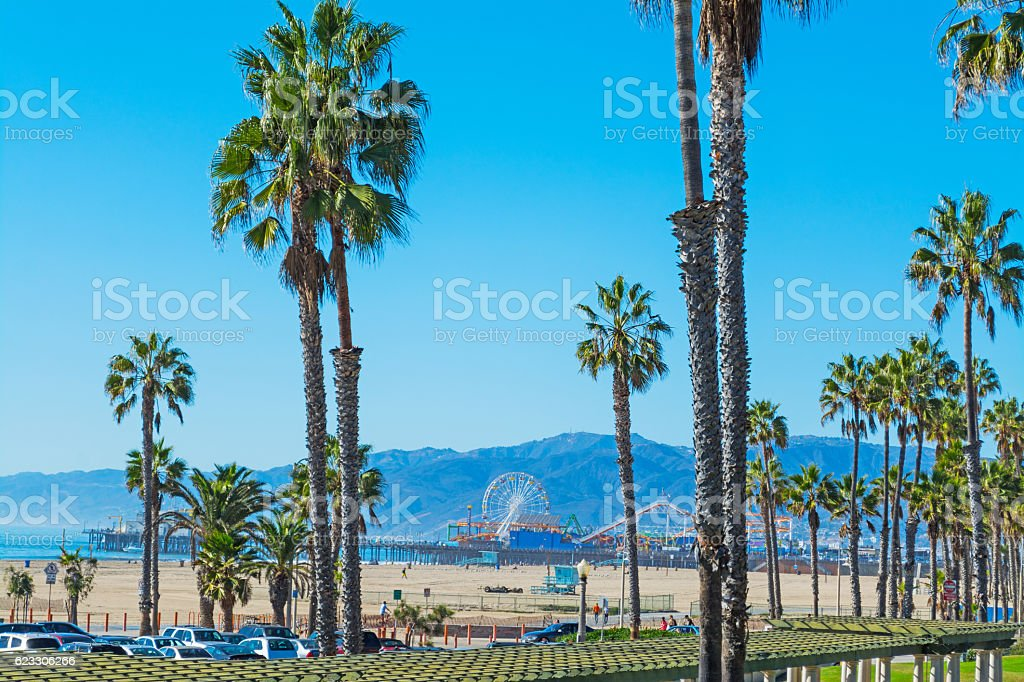 palm trees in Santa Monica stock photo