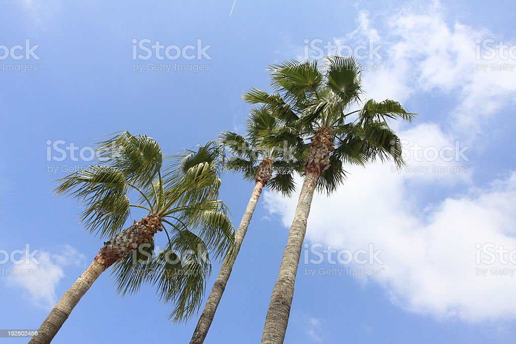 palm trees in southern california royalty-free stock photo