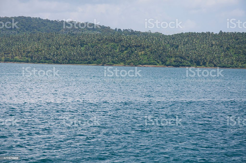Palm Trees in the Andaman Islands stock photo