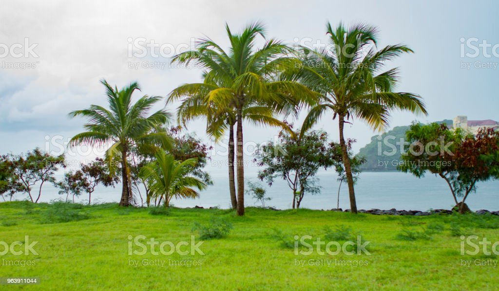 Palm trees in the Caribbean stock photo
