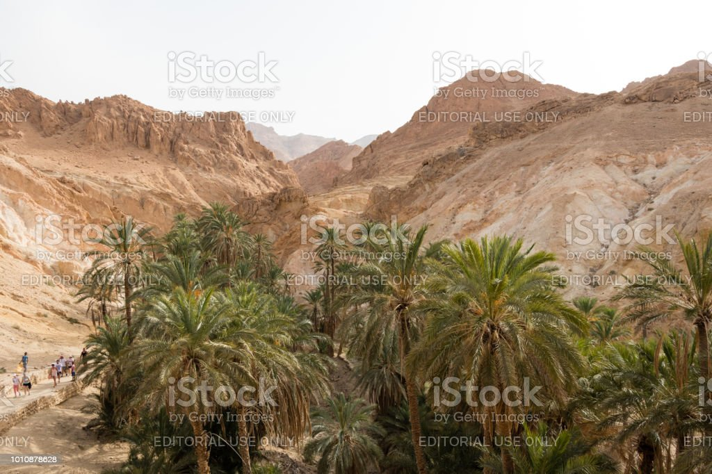 The oasis Chebika in Tunisia, Africa