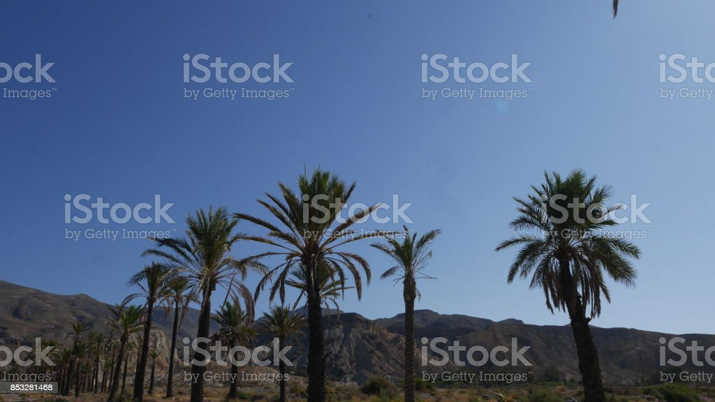 palm trees in the Sierra Alhamilla mountains