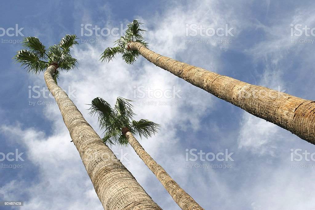 Palm trees in the sky stock photo