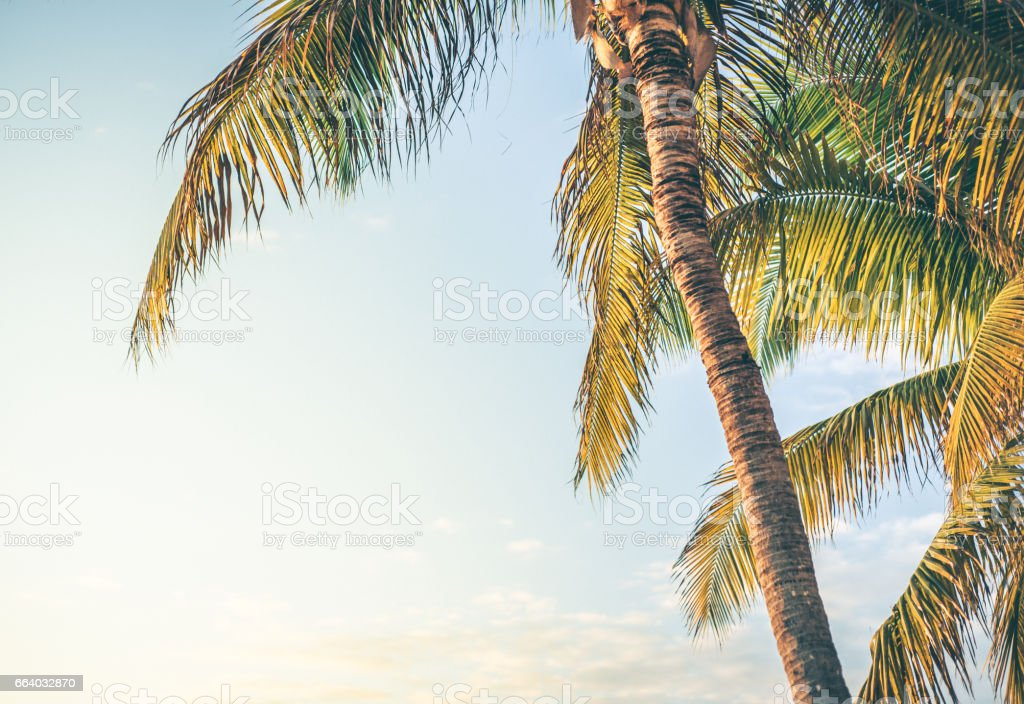 Palm Trees in the summer time. stock photo
