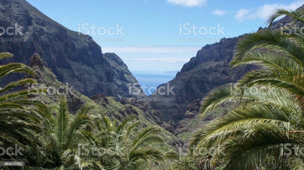 Palm trees in the valley of Masca royalty-free stock photo