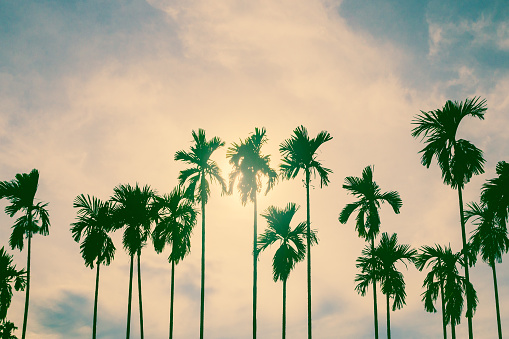 istock Palm trees in vintage style. 902148120