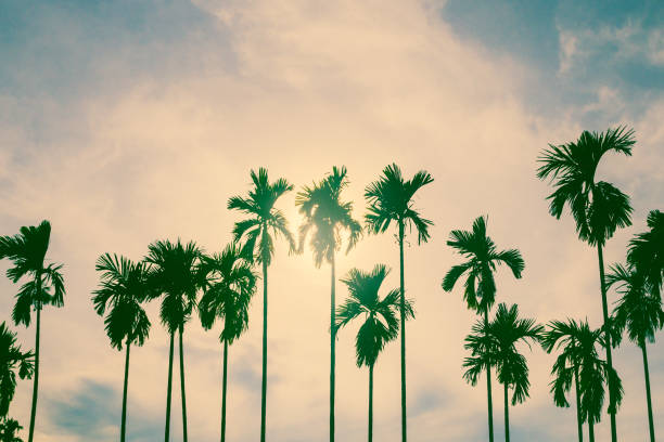 Palm trees in vintage style. Palm trees in vintage style. hollywood california stock pictures, royalty-free photos & images