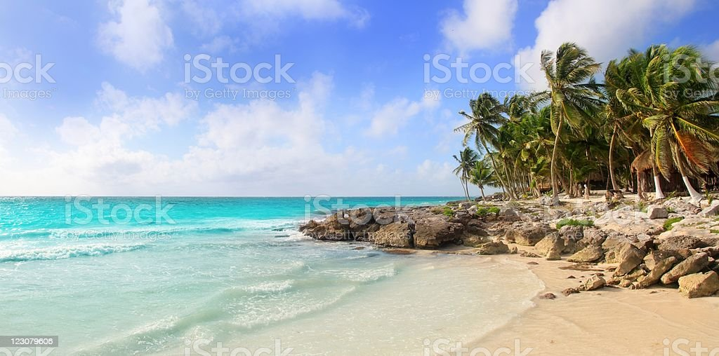 Palm trees line the rocky tropical shore in Tulum, Mexico stock photo