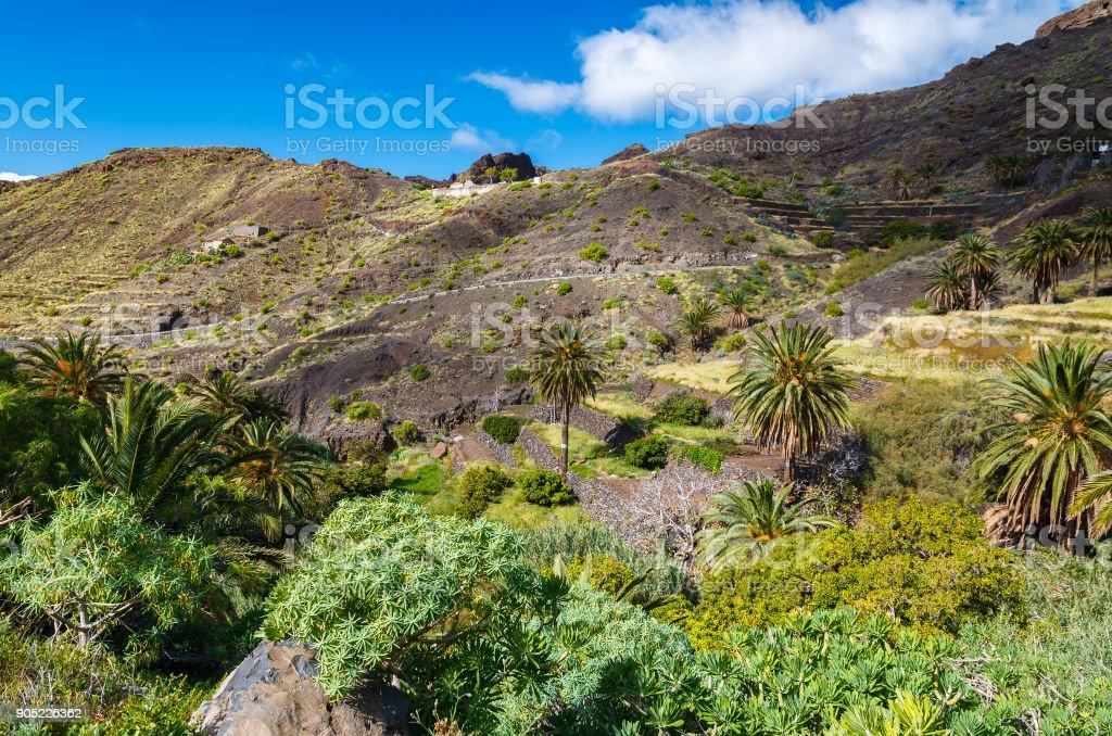 Palm trees mountain valley trekking, Taguluche village, La Gomera,...