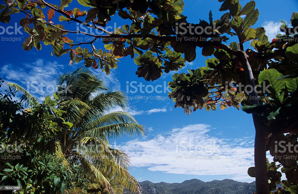 Palm trees near a mountain royalty-free stock photo