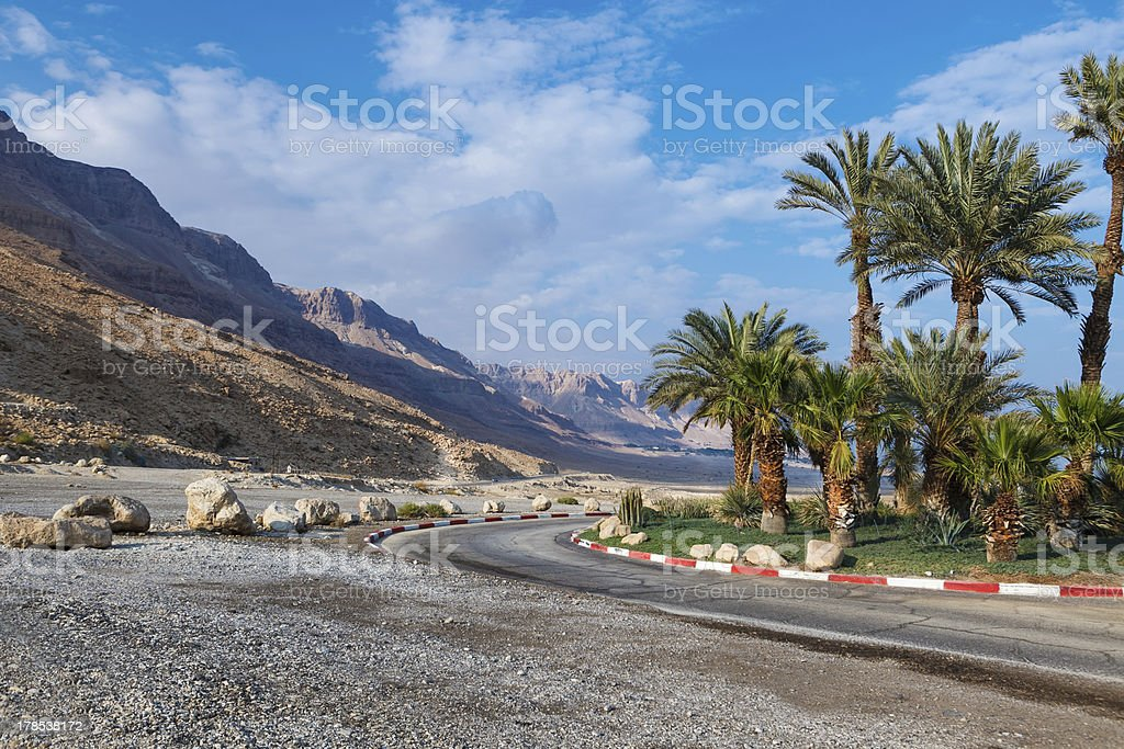 palm trees near road in Israel royalty-free stock photo